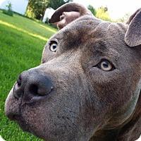 Adopt A Pet :: Bubba - Villa Park, IL