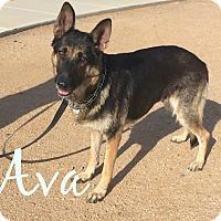 Adopt A Pet :: Ava - Scottsdale, AZ