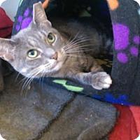 Adopt A Pet :: Billy Jean - Philadelphia, PA