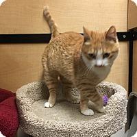 Adopt A Pet :: Sandi - Riverside, CA