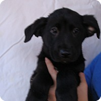 Adopt A Pet :: Micro - Oviedo, FL