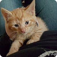 Adopt A Pet :: Zappa - McDonough, GA