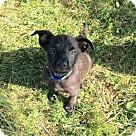 Adopt A Pet :: Floppy - Adoption Pending