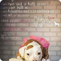 Adopt A Pet :: Merry - Arlington, TX