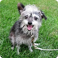 Adopt A Pet :: Bubbles - Schaumburg, IL