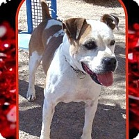 Adopt A Pet :: Ruby - Las Vegas, NV
