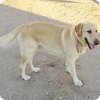 Adopt A Pet :: ** SUNNY ** - Inland Empire, CA