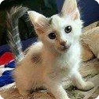 Adopt A Pet :: JANUS - Hampton, VA