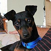 Adopt A Pet :: Toby - Malaga, NJ