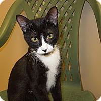 Adopt A Pet :: Boris - Medina, OH