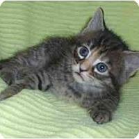 Adopt A Pet :: Reese - Richmond, VA