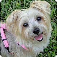 Adopt A Pet :: Hailey - West Palm Beach, FL