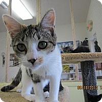 Adopt A Pet :: Sassy - Bunnell, FL