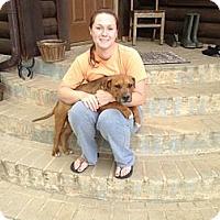 Adopt A Pet :: Debo - Charlotte, NC