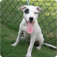 Adopt A Pet :: Patch - Killen, AL