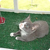 Adopt A Pet :: Cory - Riverside, RI