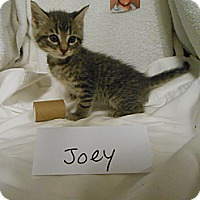 Adopt A Pet :: Joey - Maywood, NJ