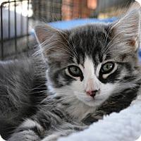 Adopt A Pet :: Bentley - Temecula, CA