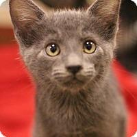 Adopt A Pet :: Dillon - Sacramento, CA