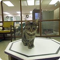 Adopt A Pet :: Sven - Medina, OH
