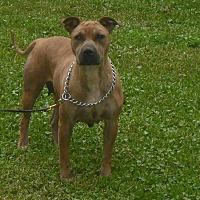Adopt A Pet :: SKITTLES - Orlando, FL