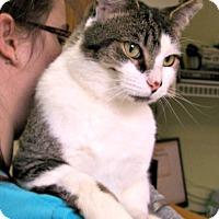 Adopt A Pet :: Sammich - Toledo, OH