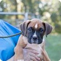 Adopt A Pet :: Sepia - Peachtree City, GA