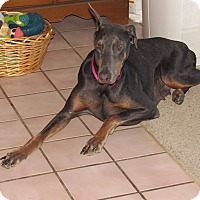 Adopt A Pet :: Bella - New Oxford, PA