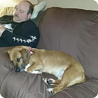 Adopt A Pet :: Emma - Rexford, NY