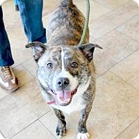 Adopt A Pet :: Skipper - Sparta, NJ