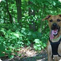 Adopt A Pet :: Sebastian - New Castle, PA