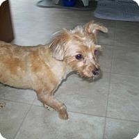 Adopt A Pet :: Britany - Bernardston, MA