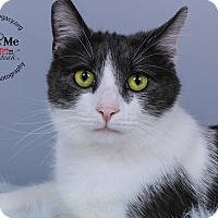 Adopt A Pet :: Brother - Cincinnati, OH