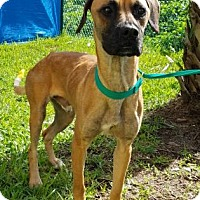 Adopt A Pet :: BJ - Miami, FL