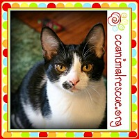 Adopt A Pet :: Coleen - Panama City, FL