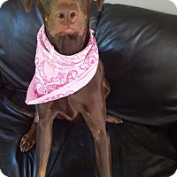 Adopt A Pet :: Kelly - Lebanon, ME