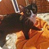 Adopt A Pet :: REID - Hampton, VA