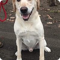 Adopt A Pet :: Jake - Battle Ground, WA