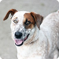 Adopt A Pet :: Lady - Canoga Park, CA