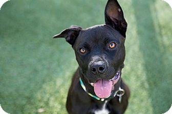 Labrador Retriever Mix Dog for adoption in Durham, North Carolina - Dori