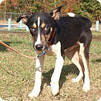 Adopt A Pet :: Frick - Oakdale, LA