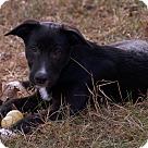 Adopt A Pet :: samuel -$200