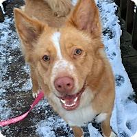 Adopt A Pet :: Shiloh - Smithtown, NY
