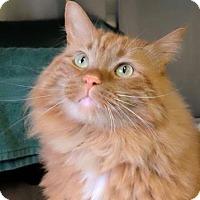 Adopt A Pet :: Mochi - Ann Arbor, MI