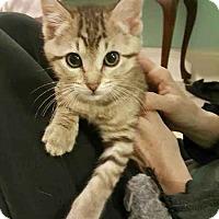 Adopt A Pet :: Sven - Jackson, MS