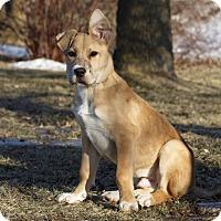 Adopt A Pet :: Hooper - Ile-Perrot, QC