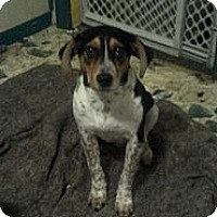 Adopt A Pet :: Judas - Hazard, KY