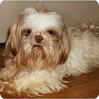 Adopt A Pet :: Gus - Mooy, AL