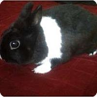 Adopt A Pet :: Ben - Long Valley, NJ