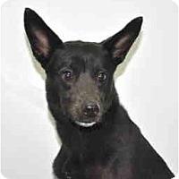 Adopt A Pet :: Cash - Port Washington, NY